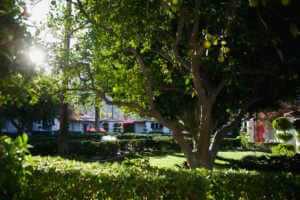 Photograph of the bungalows at Avalon Hotel